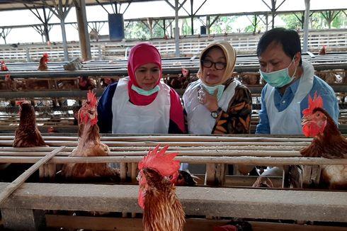 Antisipasi Telur Berdioxin, Khofifah Sidak Peternakan Ayam Petelur, Ini Hasilnya