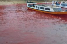 Air Laut Berwarna Merah Darah, Warga Jadi Takut Makan Ikan