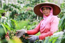 Mengenal Kopi Kawisari, Kopi Tertua dari Jawa Timur