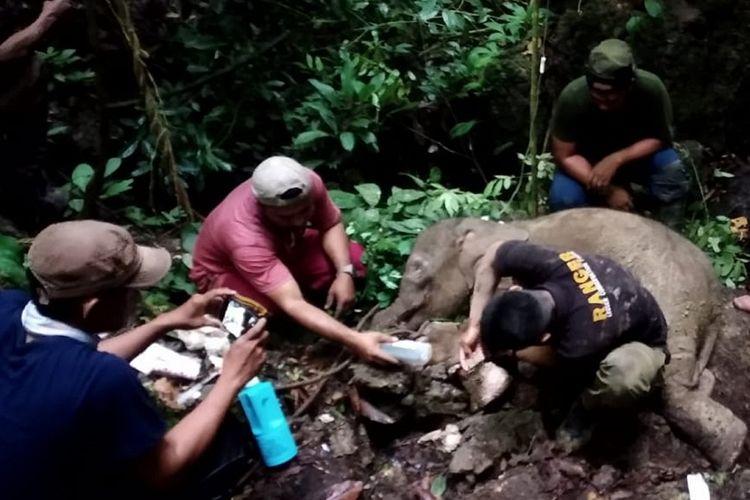 Petugas Balai Konservasi Sumber Daya Alam (BKSDA) Aceh bersama tim dokter hewan mengevakuasi anak gajah liar yang terjerat di kawasan hutan Desa Batu Sumbang, Kecamatan Simpang Jernih, Aceh Timur, Aceh, Selasa (18/6/2019). Pihak BKSDA Aceh berencana akan melakukan evakuasi terhadap anak gajah betina yang berumur satu tahun tersebut ke Conservation Respon Unit (CRU) Serbajadi untuk mendapatkan perawatan lebih lanjut. ANTARA FOTO/BKSDA Aceh-dr Fajri/Syf/pras.