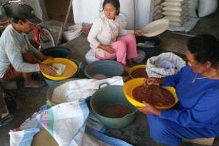 Petani di Kecamatan Rogojampi saat panen beras merah Senin (12/9/2016)