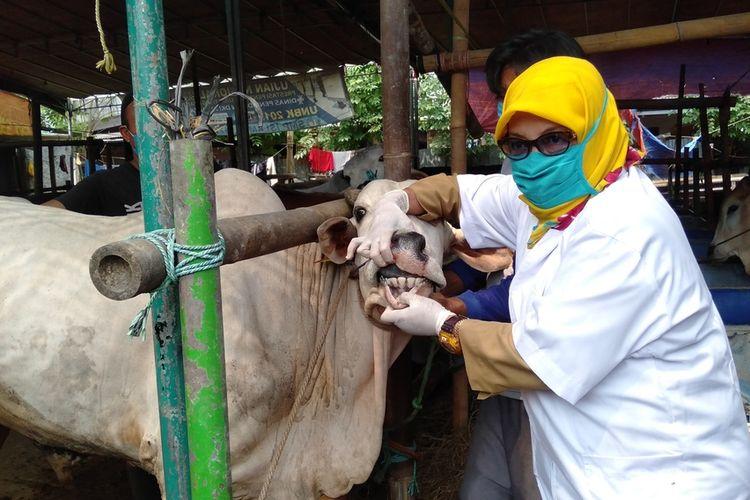 Sudin KPKP melakukan pemeriksaan hewan kurban di kawasan Pondok Kopi, Duren Sawit, Jakarta Timur, Senin (20/7/2020)