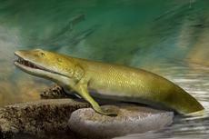 Fosil Ikan Purba Ungkap Asal Muasal Jari Tangan Manusia