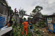 Pohon Setinggi 20 Meter Tumbang dan Menimpa Dua Warung di Serpong