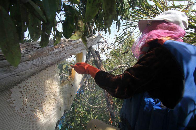 Proses panen madu hutan di Desa Semangit, Kecamatan Selimbau, Kabupaten Kapuas Hulu (27/10/2017)