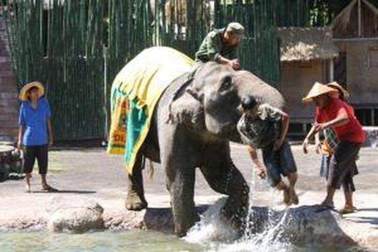 Pertunjukan Elephant Show di Bali Safari And Marine Park, di Gianyar.