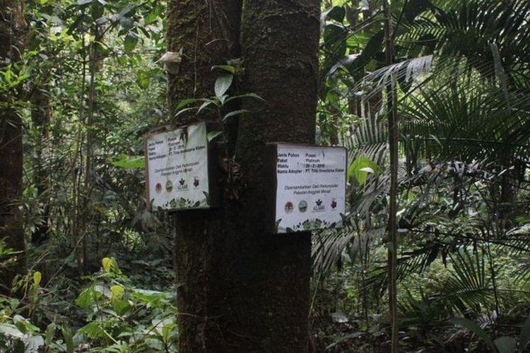 Adopsi Anggrek adalah cara Musimin mengajak masyarakat luas untuk turut serta berkontribusi dalam melakukan konservasi lingkungan, khususnya habitat orchidaceae.