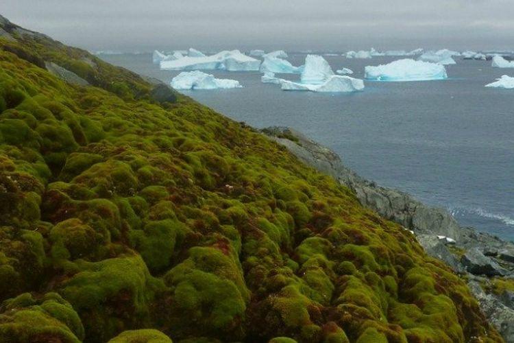 Daerah berlumut di Antartika