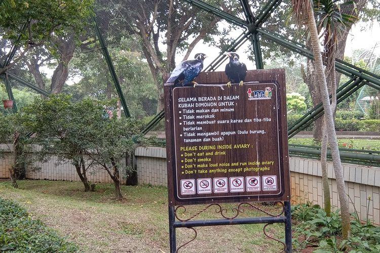 Daftar peraturan yang harus dipatuhi oleh wisatawan saat berkunjung ke Taman Burung di Taman Mini Indonesia Indah (TMII), Minggu (5/7/2020).