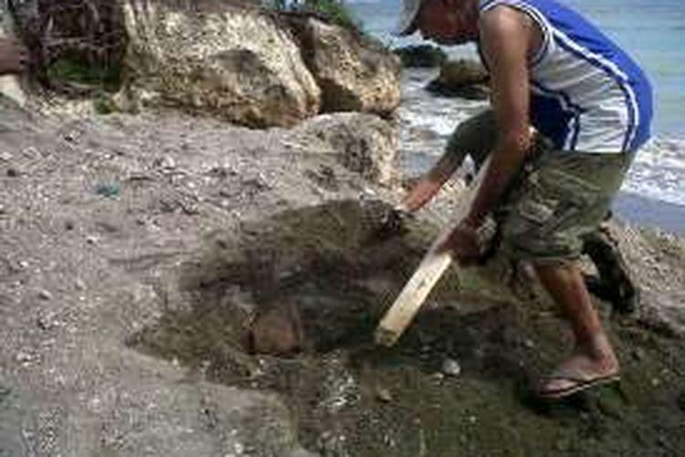 Penambang pasir saat menggali bom untuk ditunjukkan ke pihak Museum Perang Dunia ke II di Morotai, Senin (1/2/2016)