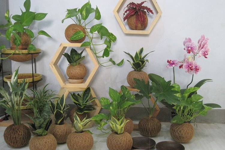 Inilah beberapa kokedama karya Nurhuda, anak buruh tani yang sukses berbisnis tanaman hias di masa pandemi covid-19