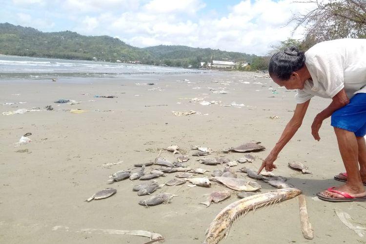 Puluhan ekor ikan ditemukan mati terdampar di Pantai Desa PAsso, Kecamatan Baguala, Ambon Senin (16/9/2019)