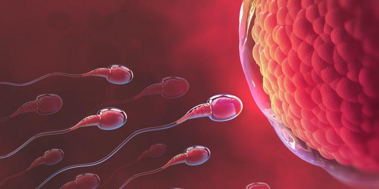 Ilustrasi sperma bergerak menuju ovum