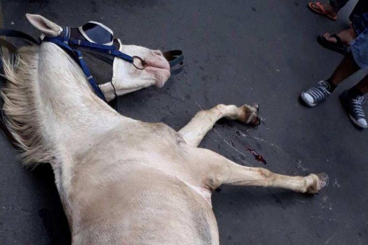 Kuda delman terluka di Sarinah, Jakarta Pusat, Minggu (19/11/2017).