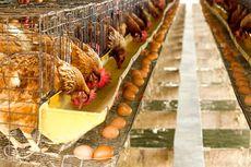 Hiperinflasi di Venezuela, Harga Ayam Pun Capai 14 Juta Bolivar