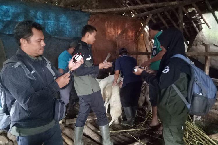 Petugas Dinas Pertanian Bondowoso saat menangani hewan yang terdampak banjir di Kecamatan Ijen