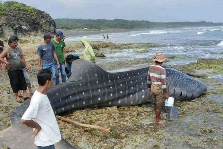 Bangkai hiu tutul dengan panjang sekitar 7 meter ditemukan warga mati terdampar di wilayah Cikalong, Pantai Selatan Kabupaten Tasikmalaya, Rabu (3/3/2021) siang.