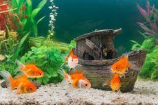 Serba serbi Hewan: Ikan di Aquarium Juga Bisa Keracunan, Ini Tandanya