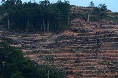 Cegah Kerusakan Hutan Meluas, Izin HTI Perlu Direvisi