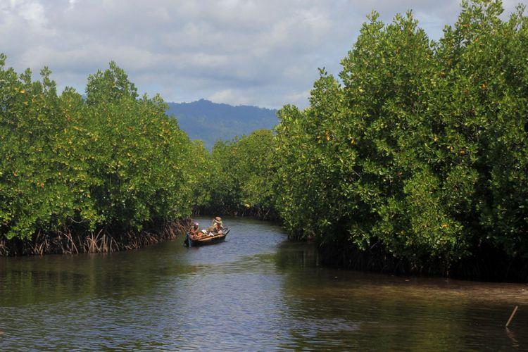 Hutan mangrove di Desa Torosiaje yang dikelola masyarakat tumbuh lestari. Kawasan ini diusulkan Pemerinrah Provinsi Sebagai Kawasan Ekosistem Esensial(KOMPAS.COM/ROSYID AZHAR)