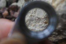 Fosil Cangkang Foram Ungkap Perubahan Iklim Bumi dan Pemanasan Global