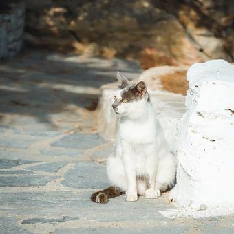 Ilustrasi kucing aegea