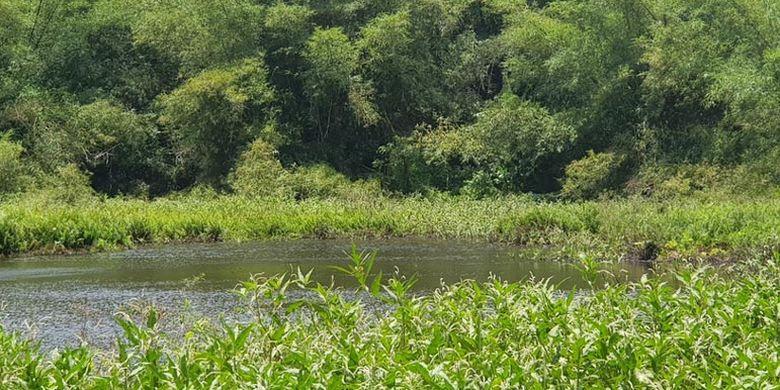 Danau Koliheret di Desa Watudiran, Kecamatan Waigete, Kabupaten Sikka, Flores, Nusa Tenggara Timur.