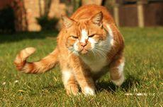 Mengapa Kucing Tidak Suka Ekornya Dipegang? Ini Alasannya