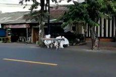Polisi: WNA yang Dievakuasi Petugas Pakai APK di Bali, Tewas Bukan karena Corona