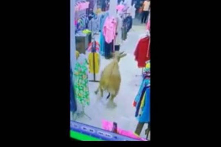Tangkapan layar CCTV toko merekam kejadian sapi masuk toko pakaian Planet Queen di Parepare, Sulawesi Selatan (2/8/2020).