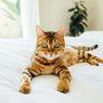 Tips Mengobati Gigitan Kucing