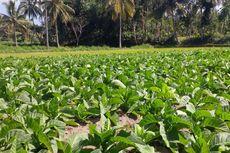 Upaya Lestarikan Lingkungan, HM Sampoerna Raih Penghargaan
