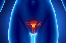 Fakta Seputar Siklus Menstruasi Wanita