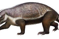 Madagaskar Penuh Hewan Aneh Sejak 66 Juta Tahun Lalu, Fosil Ini Buktinya