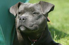 Seorang Lelaki Tewas Digigit Anjingnya Saat Sesi Wawancara dengan BBC