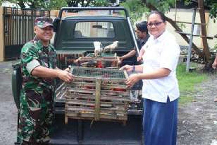 Kodim 1501/Ternate menyerahkan 33 ekor satwa endemik Maluku Utara kepada Balai Konservasi Sumberdaya Alam (BKSDA) Wilayah Ternate Kementrian Lingkungan Hidup dan Kehutanan Prov Malut, Rabu (22/6/2016)