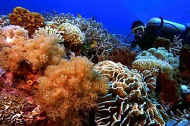 Keindahan bawah laut di Pulau Sangalaki, Kepulauan Derawan, Kalimantan Timur.