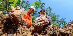 PGN Borong 16 Penghargaan dalam ESG Awards 2020