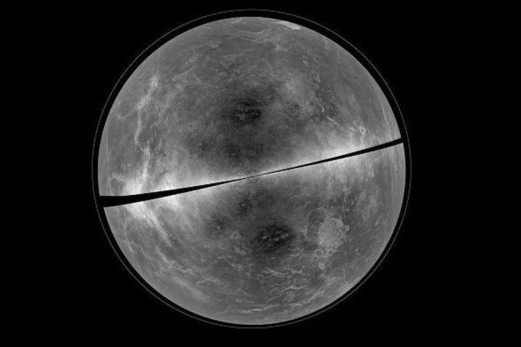 100+ Gambar Bunga Venus Dan Penjelasannya Terbaru