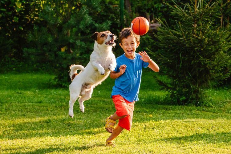 Ilustrasi anjing bermain