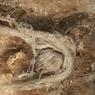 Tali Tertua di Dunia Ditemukan, Pembuatnya Manusia Purba Neanderthal