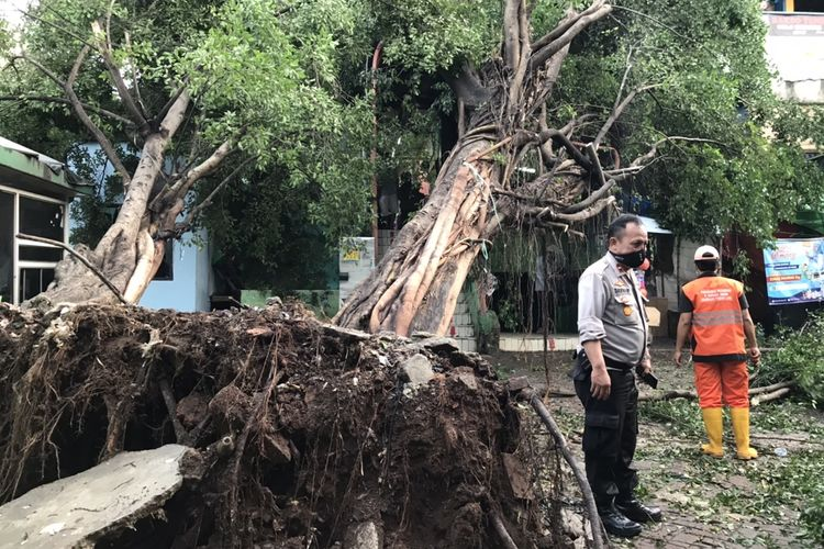 Dua pohon beringin di area parkir motor Pasar Pondok Labu, Cilandak, Jakarta Selatan rubuh dan menimpa   sejumlah bangunan Pondok Labu pada Kamis (12/11/2020) sekitar pukul 16.10 WIB.