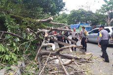 Hujan Deras Disertai Angin Kencang Landa Bangkalan, Pohon Tumbang dan Tiang Listrik Roboh