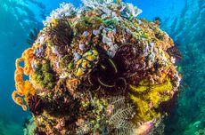 Ahli Perkirakan, Ekosistem Laut Dunia Akan Kembali Pulih pada 2050