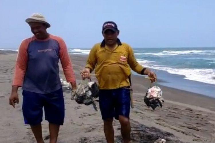 Warga di pantai selatan Cianjur, Jawa Barat, akhirnya memotong hiu paus tutul yang terdampar, untuk dikonsumsi karena saat ditemukan sudah mati, Ahad (26/9/2021). (ANTARA/Ahmad Fikri)