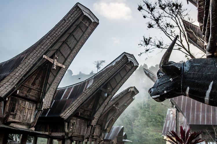 Rumah Tongkonan, rumah adat Suku Toraja DOK. Shutterstock/JOSE MIGUEL NAVARRETE