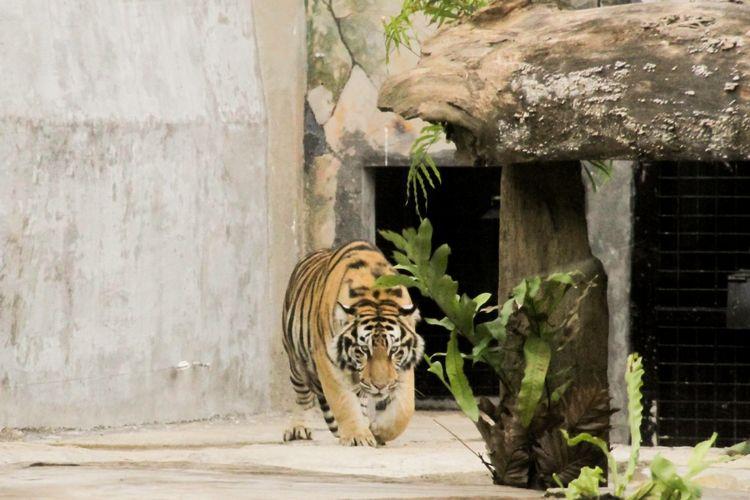 Lembang Park & Zoo merupakan area rekreasi tempat bermain yang dikombinasikan dengan kebun binatang. Di sana juga terdapat beberapa spot instagramable.