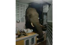 Gajah di Thailand Jebol Tembok Dapur Rumah Orang dan Curi Sekantong Beras