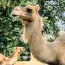 Bantu Pakan Satwa, Jurug Zoo Solo Buka Kembali Program Adopsi Satwa
