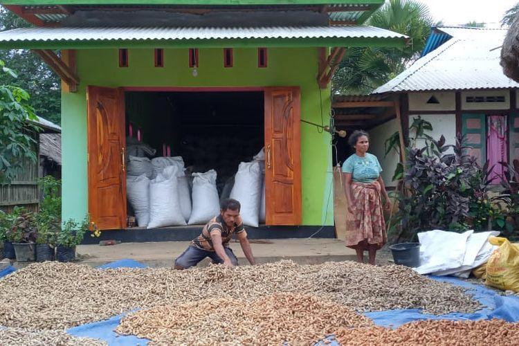 Kacang lurik organik milik Kelompok Tani Tunas Baru, Desa Fafinesu A, Kecamatan Insana Fafinesu, Kabupaten Timor Tengah Utara, Nusa Tenggara Timur, yang menembus pasar internasional